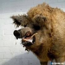 Pic #6 - This is Taxiderpy