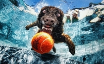 Pic #7 - Dogs  ball  Underwater camera