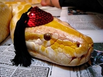 Pic #7 - Snakes wearing hats