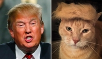 Pic #7 - Things Donald Trump looks like