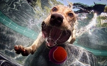 Pic #8 - Dogs  ball  Underwater camera