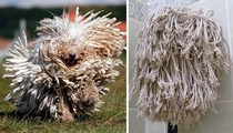 Pic #8 - Dogs that look like other things