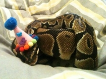 Pic #8 - Snakes wearing hats