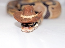 Pic #9 - Snakes wearing hats