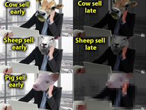 Pigs sell late