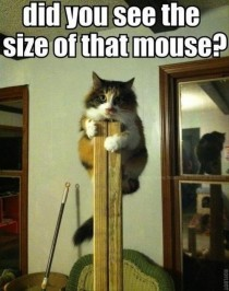 Poor kitty seen a big mouse