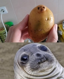 Potato seal