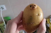 Potatoe or seal