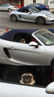 Pug riding shotgun in a Porche judging the fuck out of me