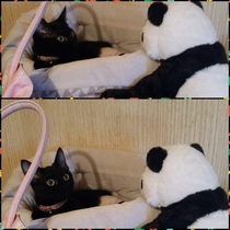 Put a stuffed panda in front of my cats bed Her reaction was priceless