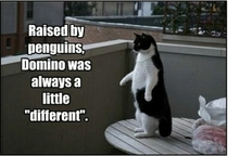 Raised by Penguins