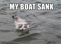 Random cat found swimming to shore from the middle of the lake
