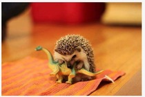 Reinactment of how the dinosaurs became extinct