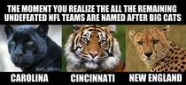 Remaining undefeated NFL teams have something in common