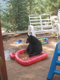 Sad bear popped a hole in my friends pool