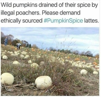 Save the pumpkins