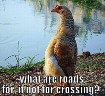 Saw that guys awkward chicken who stands up straight thought he deserved to be a meme Meet thoughtful chicken
