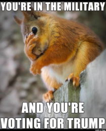 Second-Hand Embarrassment Squirrel Is Disgusted