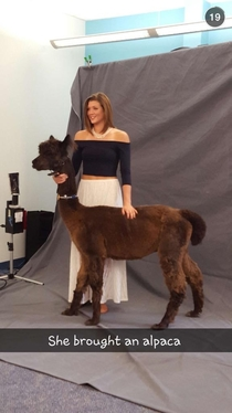 She brought an alpaca to her senior portraits