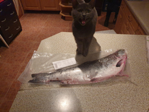 She really wanted that fish