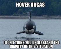 Silly Orcas not following the laws of physics