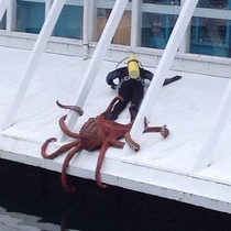 Sir do you have a moment to talk about our lord and savior Cthulu