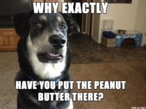 Skeptical Dog is Skeptical