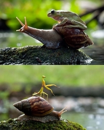 Snails Natures noble steed