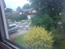 So a lorry just broke down outside my house and loads of sheep escaped from it
