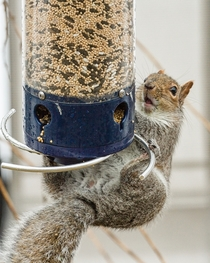 So I bought this expensive Squirrel proof bird feeder