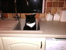So I walked into the kitchen at am and saw this in the sink This is not my cat
