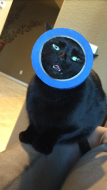 So my cat got her head stuck in a roll of tape