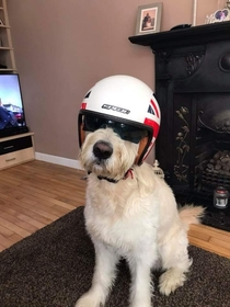 So my dad got his dog a motorcycle helmet
