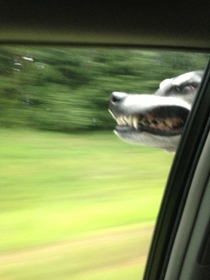 So my friends dog enjoys car rides