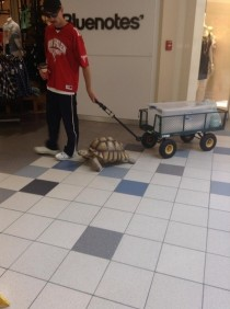So this guy was just casually walking his tortoise through the mall