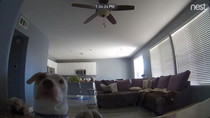 So we just got a Nest Cam and something kept triggering motion alerts This happened about  times