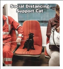 Social Distance Support Cat