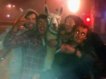 Some drunk French stole a llama from a circus and spent the night with him in town Even took the tramway