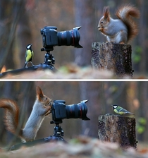 Some Russian photographer captures the cutest squirrel photo session ever
