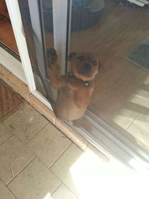 Somehow my puppy got stuck between the sliding door and the flyscreen
