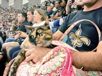Someone managed to sneak a cat into the Saints game tonight