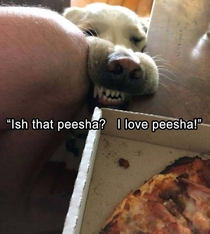 Someone want peesha