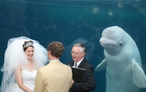 Something old something new something borrowed something Beluga
