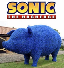 sonic the hoghedge