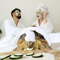 Spa day is incomplete without a tiny tortoise turban