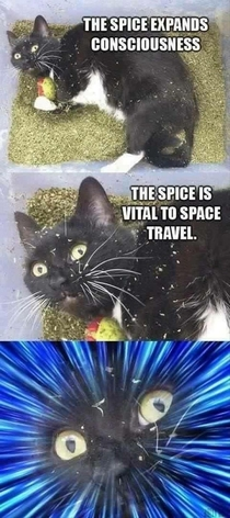 Spice travel