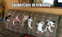 SpiderCats In Training