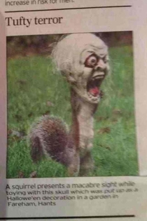 Squirrel gets his head stuck in a Halloween mask and becomes the most horrifying creature on the face of the planet