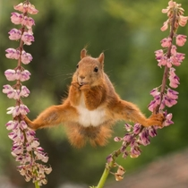 Squirrels Doing Karate
