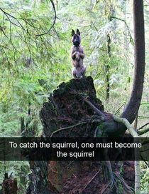 Squirrely dog
